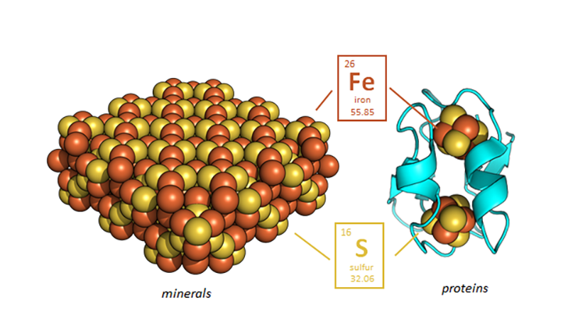 Once life emerged, it rapidly evolved thousands of protein folds that used metals from the environment to move electrons around.  At the heart of these proteins are simple protein modules that are repurposed throughout evolution to build modern protein machines.